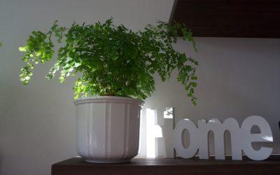 Paprocie w twoim domu