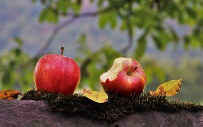 Zdrowa eko dieta jesienią?